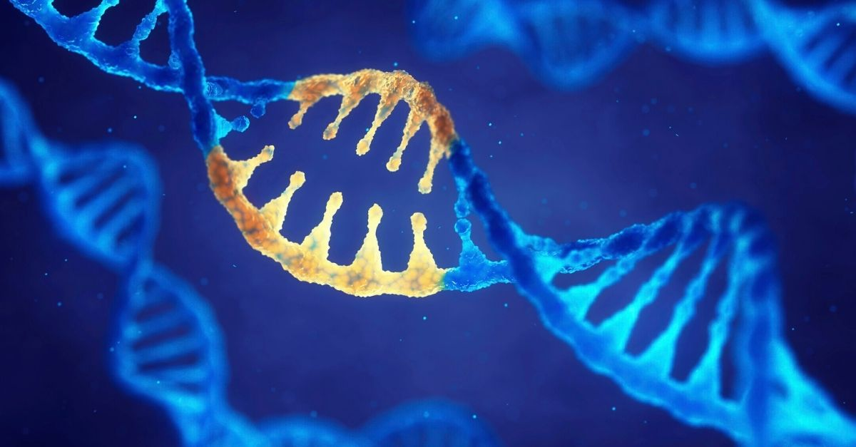 How Can CRISPR Cas9 and Zebrafish be Used Together?