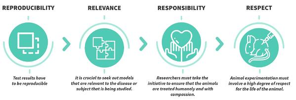 The 3Rs Of Animal Research: What Is It, Applications, and Alternative Models